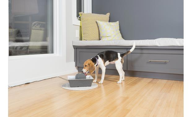 PetSafe Drinkwell® Seascape Pet Fountain Looks and sounds pleasant in your home