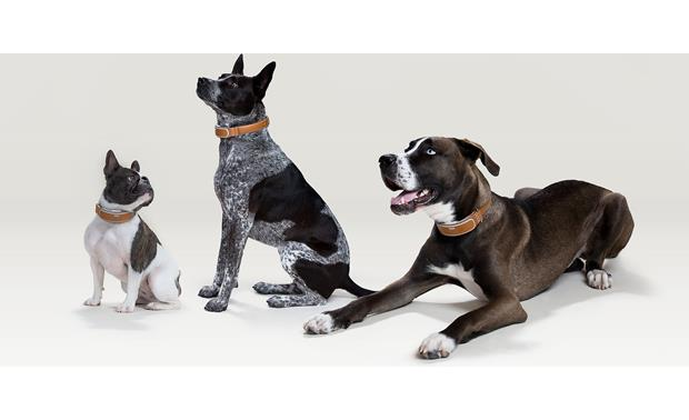 Link AKC If your dog starts out small and gets bigger, Link AKC will upsize the collar for free