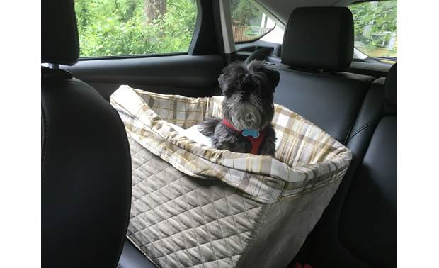 PetSafe Deluxe Pet Safety Seat Crutchfield intern Milo enjoys his new view.