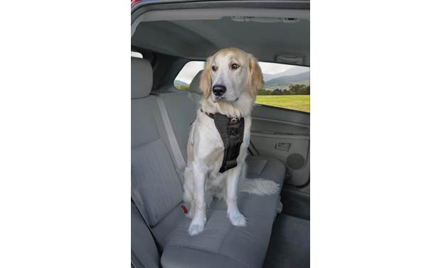 PetSafe Enhanced Strength Vehicle Harness Front