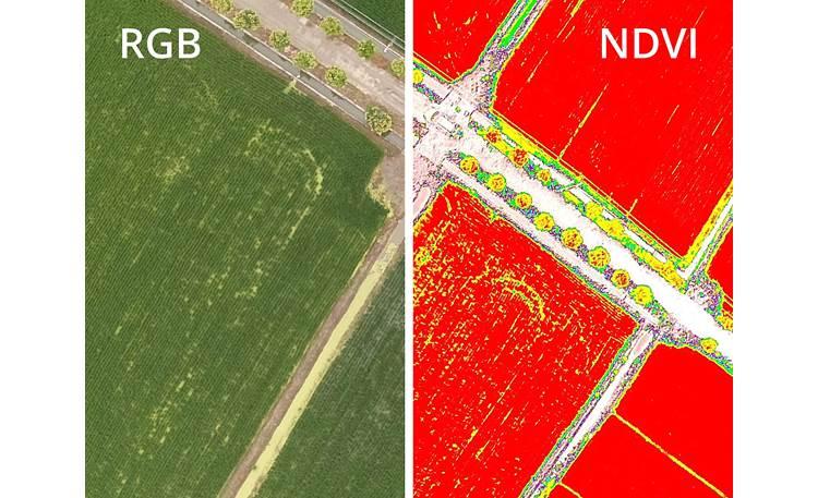 DJI P4 Multispectral Drone Compare Normalized Difference Vegetation Index (NDVI) analysis and live RGB feed