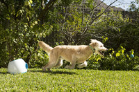 iFetch B-100 Ball Launcher for Large Dogs