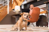 Petsafe 100 Yard Remote Trainer  Dog training collar